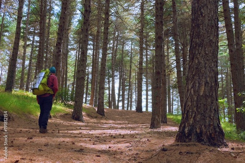Fényképezés  Man Walking In The Forest Pines Of Etna Park, Sicily