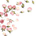 canvas print picture - Border of small dry roses on white background. Place for text.