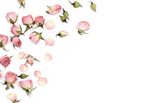 Border Of Small Dry Roses On White Background. Place For Text.