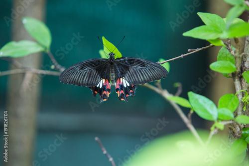 Butterfly on flower or tree in green garden Canvas Print