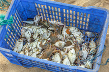 Fish And Crabs Fresh Out Of Th...