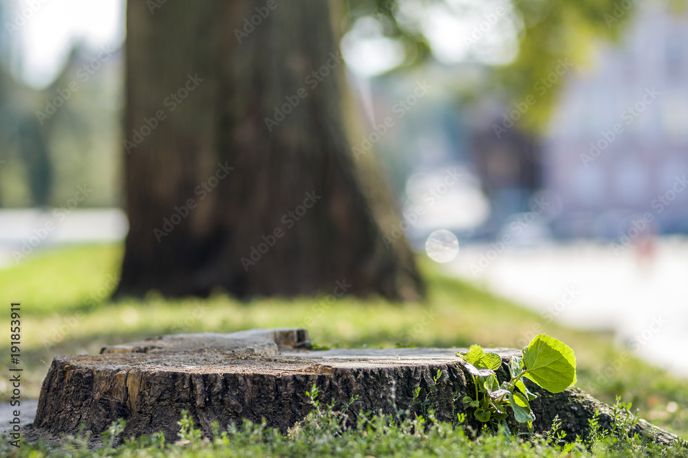 Stump of a tree on the green grass in the city.