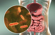 canvas print picture - Intestinal microbiome, 3D illustration showing anatomy of human digestive system and enteric bacteria Escherichia coli, E. coli, colonizing jejunum, ileum, other parts of intestine. Gut normal flora
