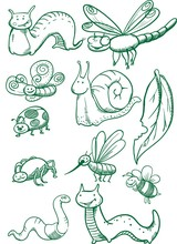 Insects Set. Drawn Insects Set...