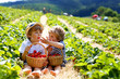 canvas print picture - Two little sibling boys on strawberry farm in summer