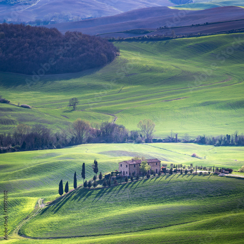 Staande foto Olijf Tuscany, spring landscape, Pienza. Italy