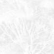 Tree texture background #8