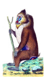 Illustration of the animal. - 191883355