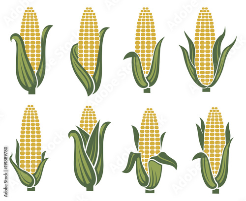 Fotomural collection of corn ear images