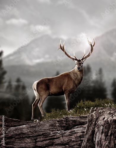 Deurstickers Hert deer in wildness_photo-manipulation