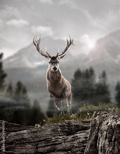 Tuinposter Hert deer in wildness_photo-manipulation