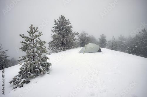 Fényképezés  Wild Camp In Winter Pinewood Of Etna Park, Sicily