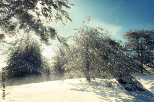 Fényképezés  Sunbeam Through Snowy Pines Trees In Etna Park, Sicily