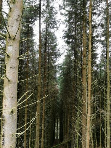 Photo Firebreak in forest