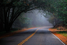 A Misty Roadway Under A Tunnel Of Trees.