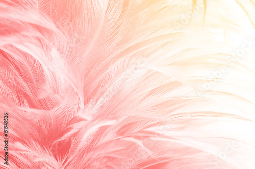 Garden Poster Flamingo Beautiful red-pink colors tone feather with orange light texture background,trends color