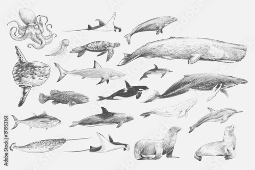 Photo  Illustration drawing style of marine life collection
