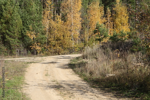 Foto op Canvas Weg in bos Colored trees in the autumn forest