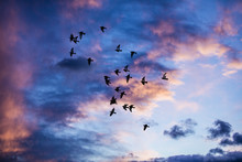 Silhouette Of Birds Flying Int...