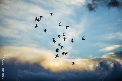 birds flying into the sunset clouds Wallpaper Mural