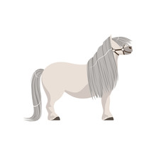 White Pony With Grey Mane, Thoroughbred Horse Vector Illustration