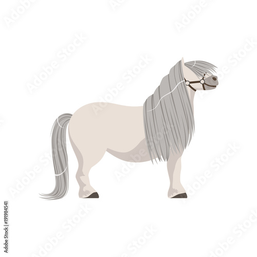 White pony with grey mane, thoroughbred horse vector Illustration Canvas Print