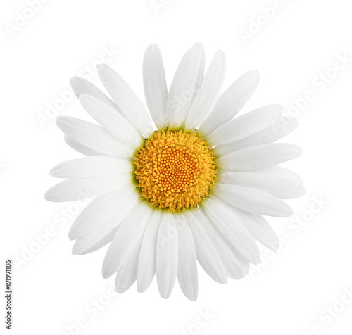 Fotobehang Madeliefjes Daisy flower isolated on white background as package design element.
