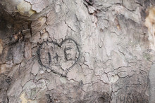 Engravings On A Tree's Bark
