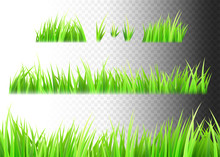 Grass Vector Isolated On White...