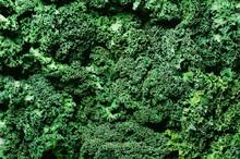 Fresh Organic Green Kale Backg...