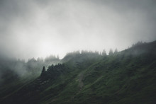 Evergreen Forests Shrouded In Cloud And Fog