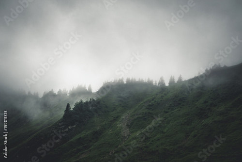 Evergreen forests shrouded in cloud and fog Canvas Print