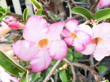 Picture Flower In Garden.