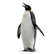King Penguin Isolated On White. 3D Illustration