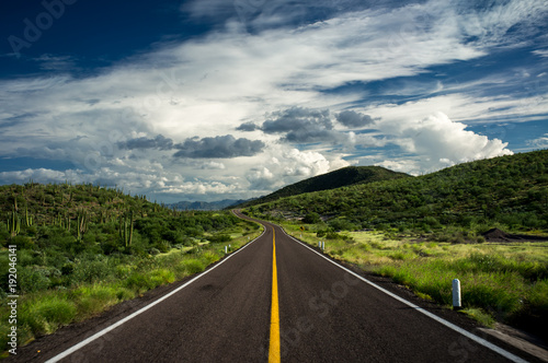 A road with yellow line runs through the desert in Baja California that is green after recent rain Canvas Print