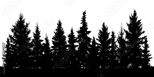 Fototapeta Forest of Christmas fir trees silhouette. Coniferous spruce. Vector on white background obraz