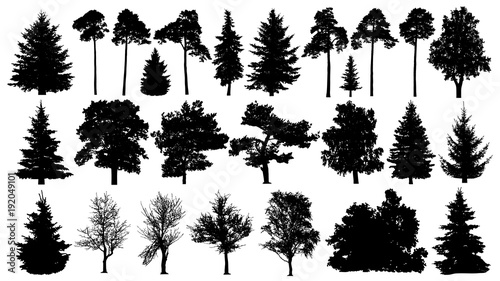 Obraz Trees set silhouette. Coniferous forest. Isolated tree on white background. - fototapety do salonu