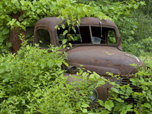 Rusted Truck Buried In Foliage_4