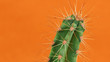 Leinwanddruck Bild - Cactus on orange background. Creative design. Minimal  art gallery. Fresh colors pastel trend.