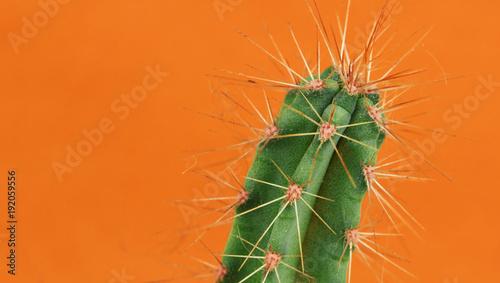 Keuken foto achterwand Cactus Cactus on orange background. Creative design. Minimal art gallery. Fresh colors pastel trend.