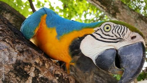 Canvas Print Schöner bunter Papagei in Palme