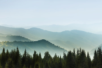 Fototapeta Vintage Majestic landscape of summer mountains. A view of the misty slopes of the mountains in the distance. Morning misty coniferous forest hills in fog and rays of sunlight. Travel background.