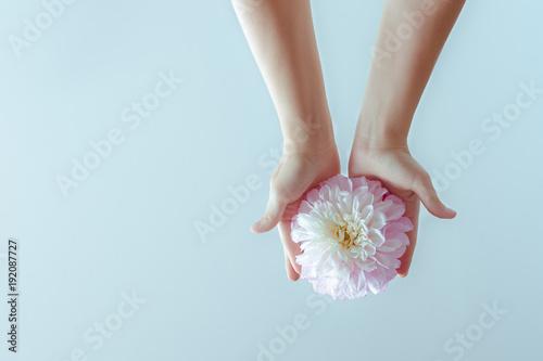 Fotografia  Female hands holding a delicate flower on a blue background