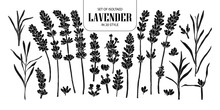 Set Of Isolated Silhouette Lavender In 20 Styles. Cute Hand Drawn Flower Vector Illustration In White Outline And Black Plane.
