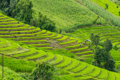 Poster Rijstvelden Terraced rice fields at Pa pong Pieng in Chiang Mai, Thailand