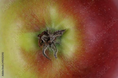 Vászonkép Jabłko ligol widok od dołu na zagłębienie kielichowe macro