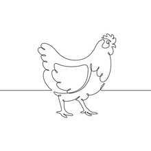 Vector Drawing Of A Chicken, D...