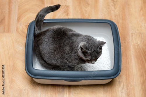 Photographie  Cat using toilet, cat in litter box, for pooping or urinate, pooping in clean sand toilet