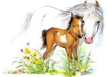 Horse And Foal Watercolor Illu...