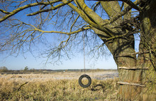 Hanging Tire - Swing On An Old Tree